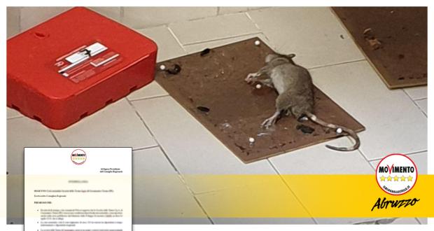 ratto_ospedale_vasto